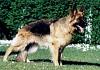 Millenniumdogs 2000 Cani nella rete di IDAC