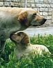 Millenniumdogs3 - Cani al Raduno :o)